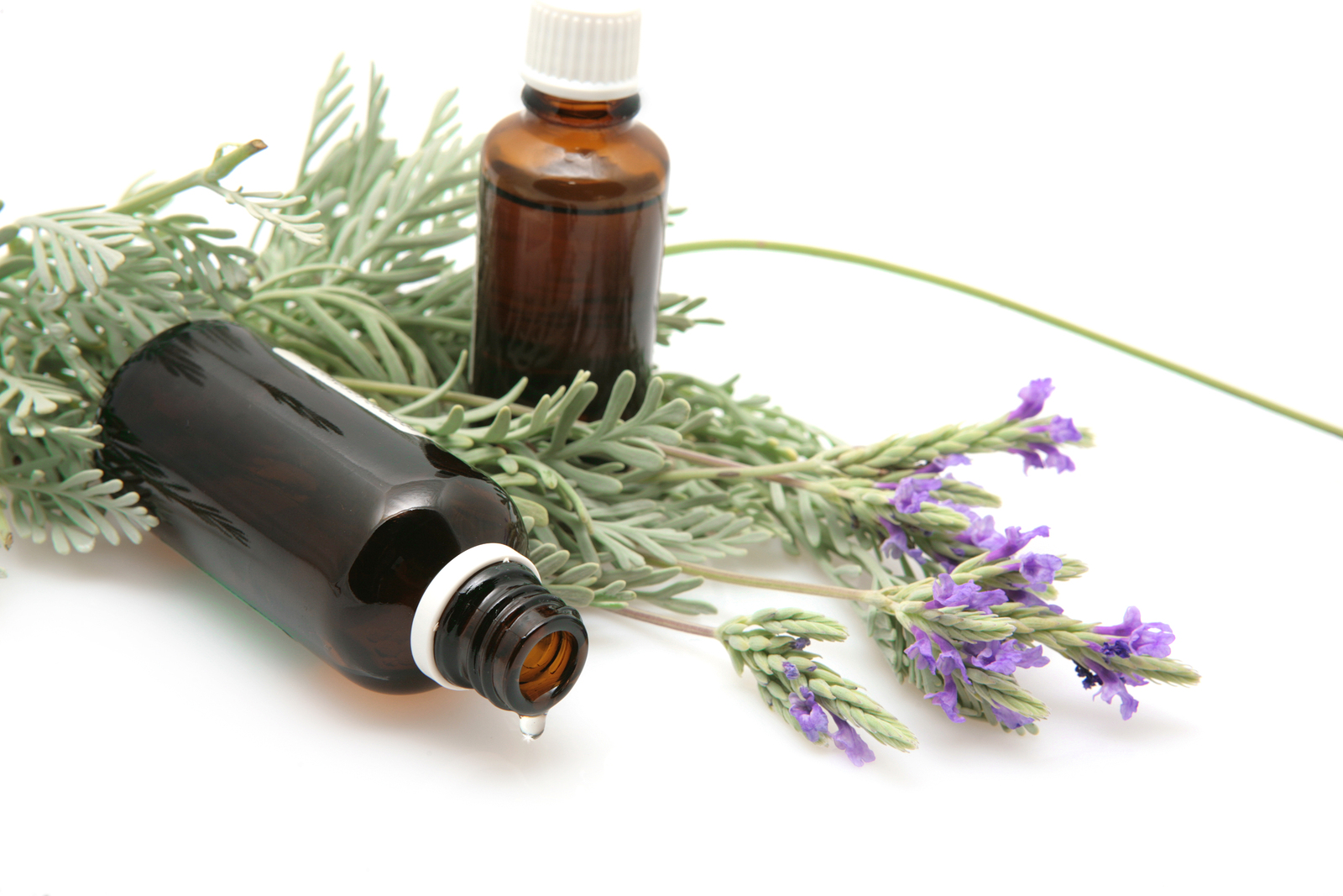 a discussion about the power of aromatherapy The healing power of aromatherapy + 7 essential oils you can't live without   an all-natural range of organic essential oils that embrace the power of raw  essences to support,  real talk: how i've battled my insomnia.
