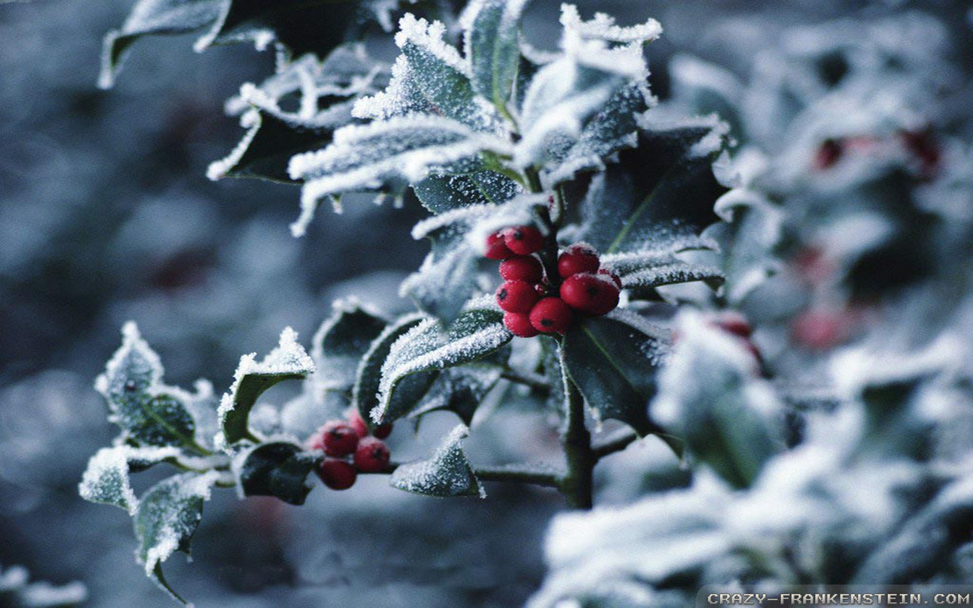 Winter Christmas Backgrounds: Winter Berries Wallpaper