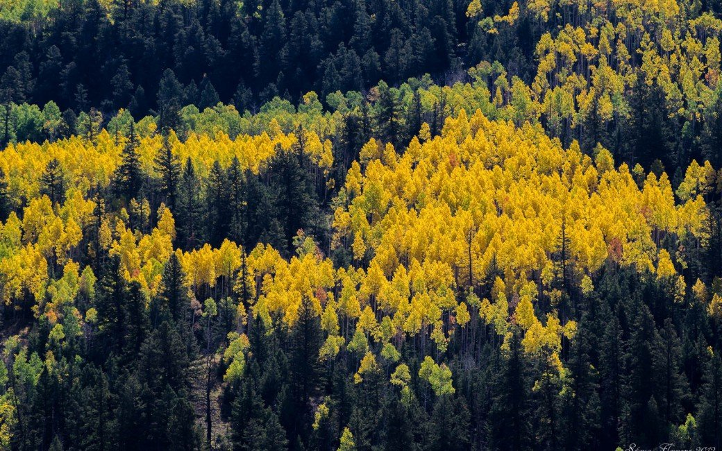 Autumn Trees Aspens Pines Spots Paints Colors From Above 1040x650