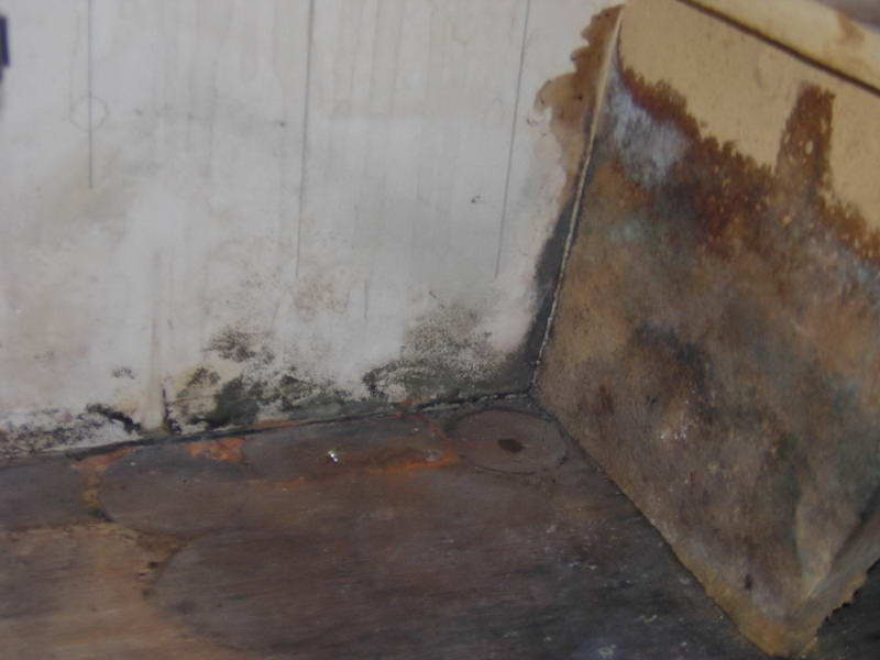 is mold behind wallpaper dangerous wallpapersafari. Black Bedroom Furniture Sets. Home Design Ideas