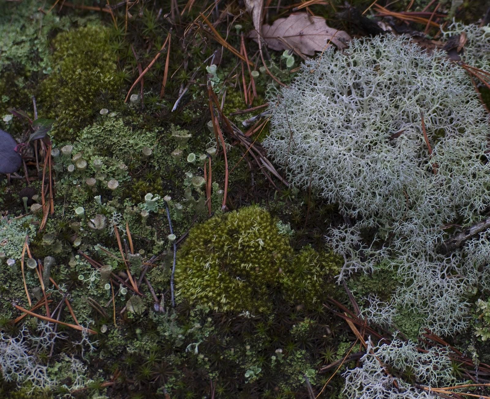 Mossy Oak Winter Break Up Wallpaper PicsWallpapercom 1600x1305