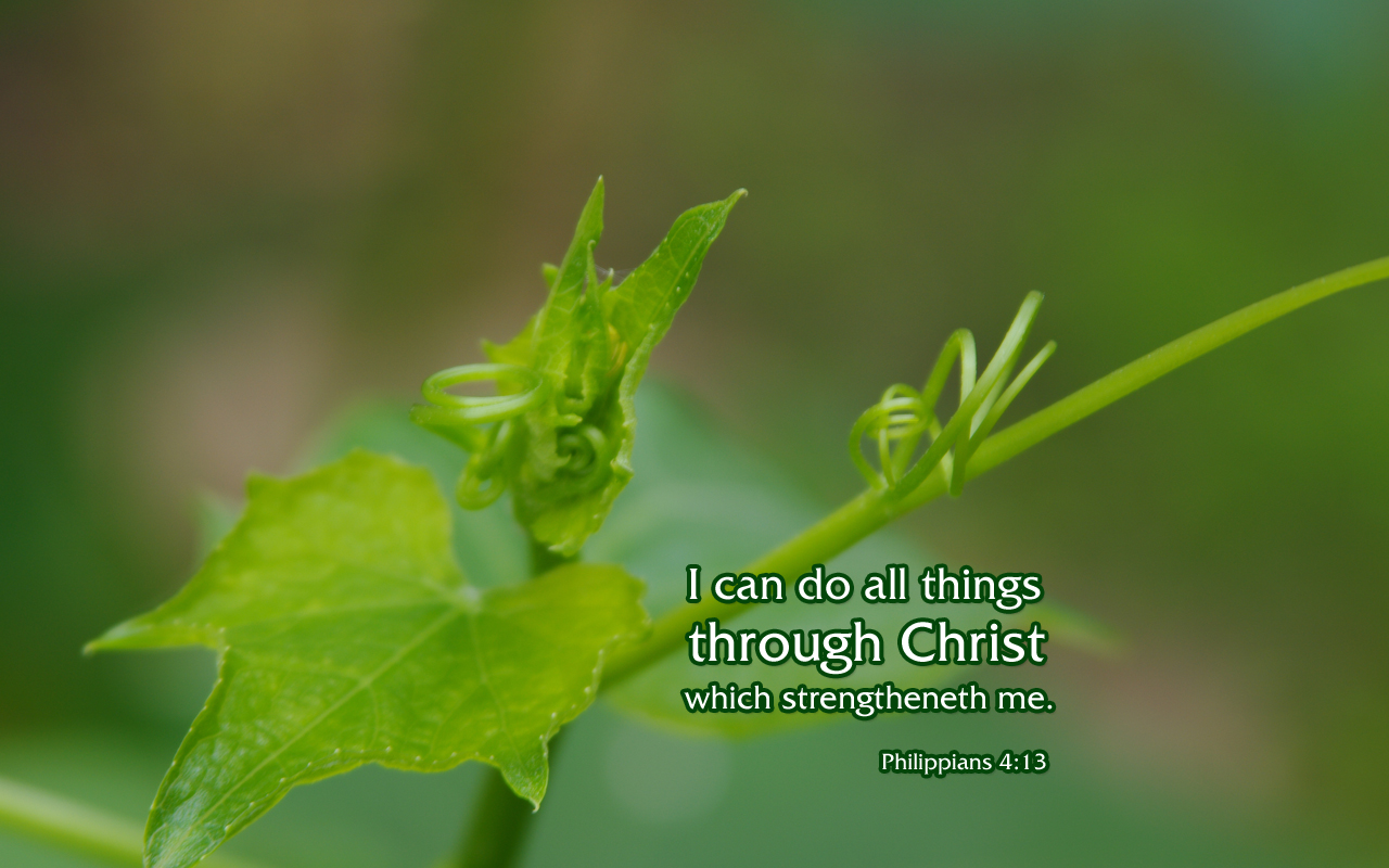 Philippians 413   Nature Bible Desktop Background Wallpaper 1280x800