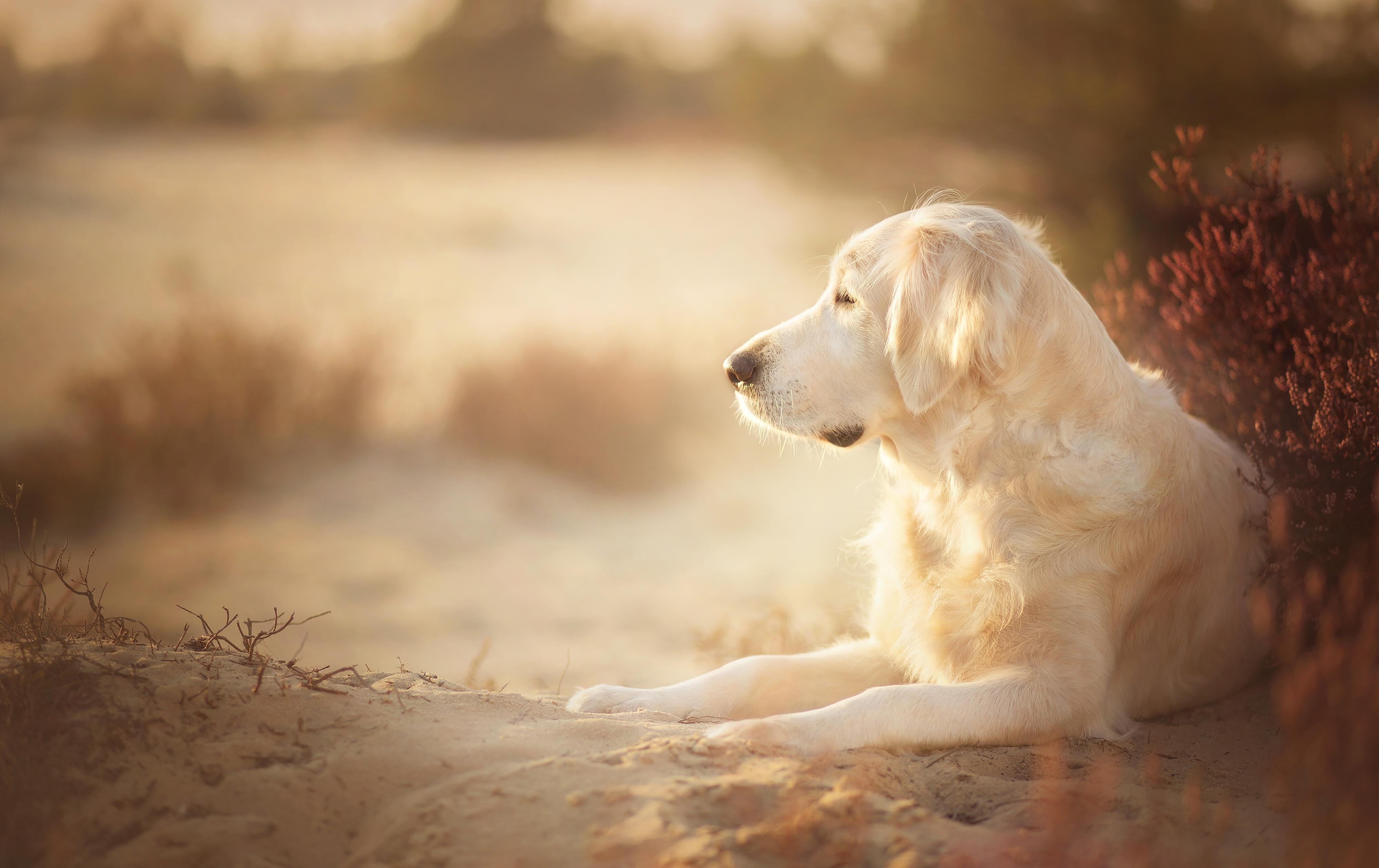 собака песок вода животное природа  № 956885 бесплатно