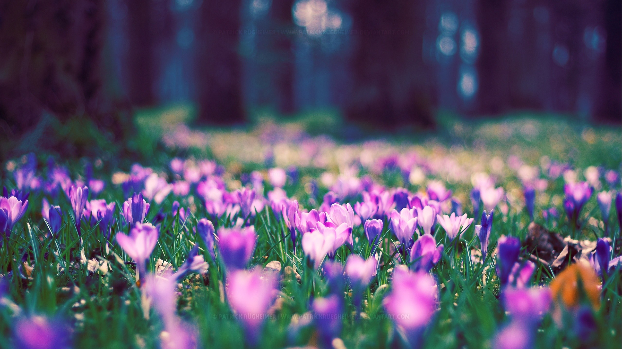 74 Spring Flower Wallpapers on WallpaperPlay 2560x1440