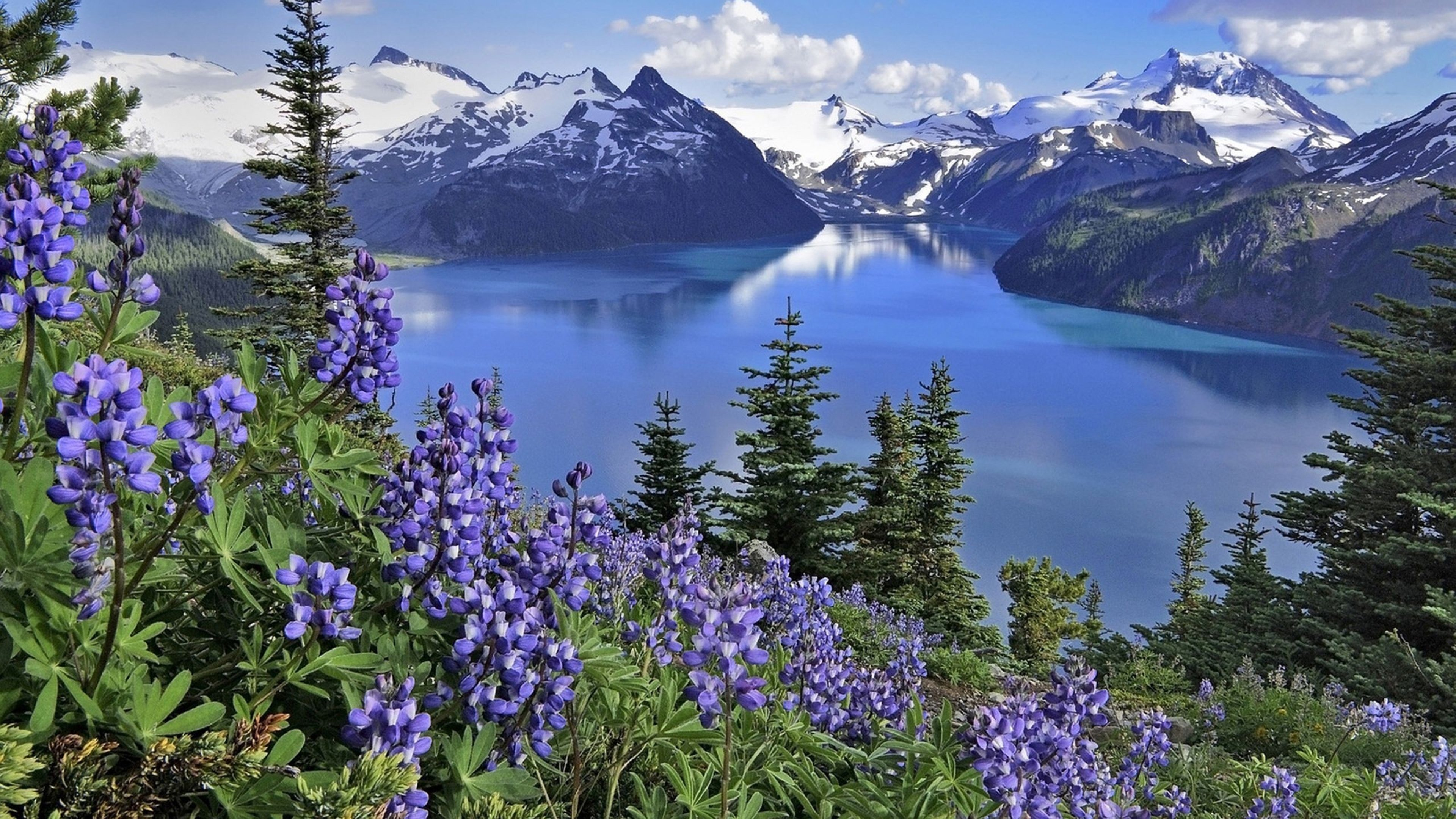 Wallpaper 3840x2160 Flowers Mountains Lake 4K Ultra HD HD Background 3840x2160