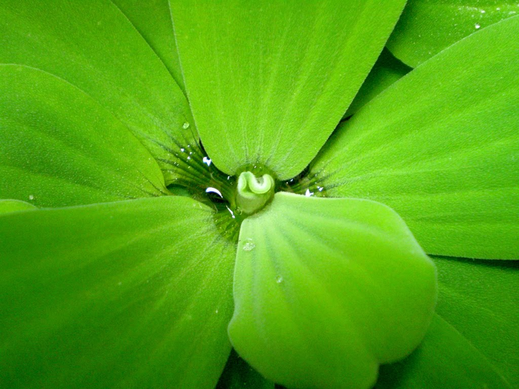 Free Download Nature Images For Desktop Download Nature