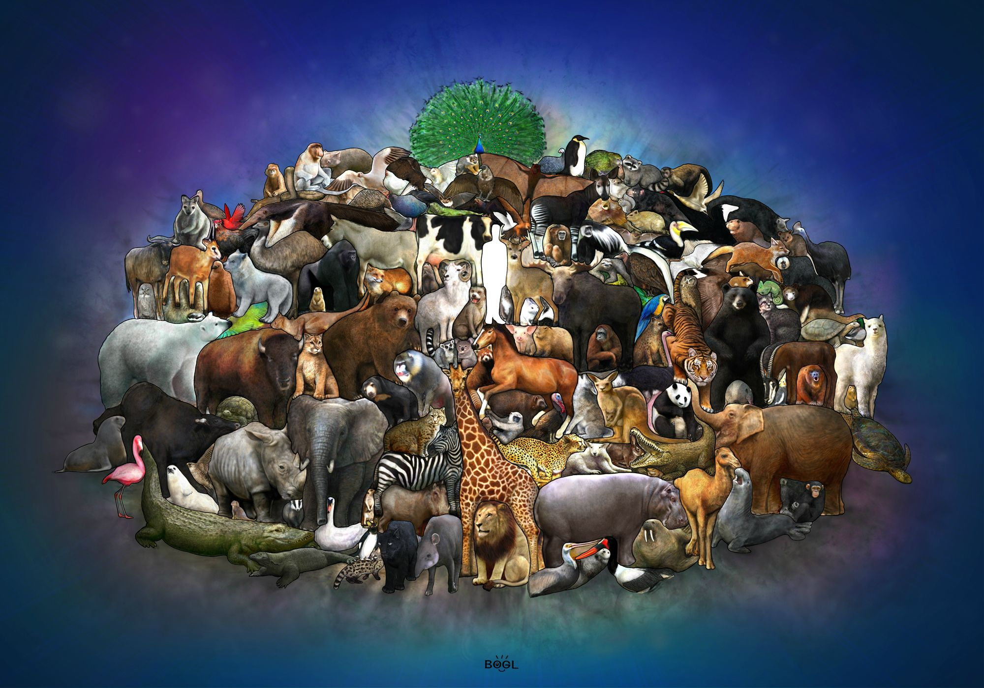 all animals wallpaper wallpapersafari
