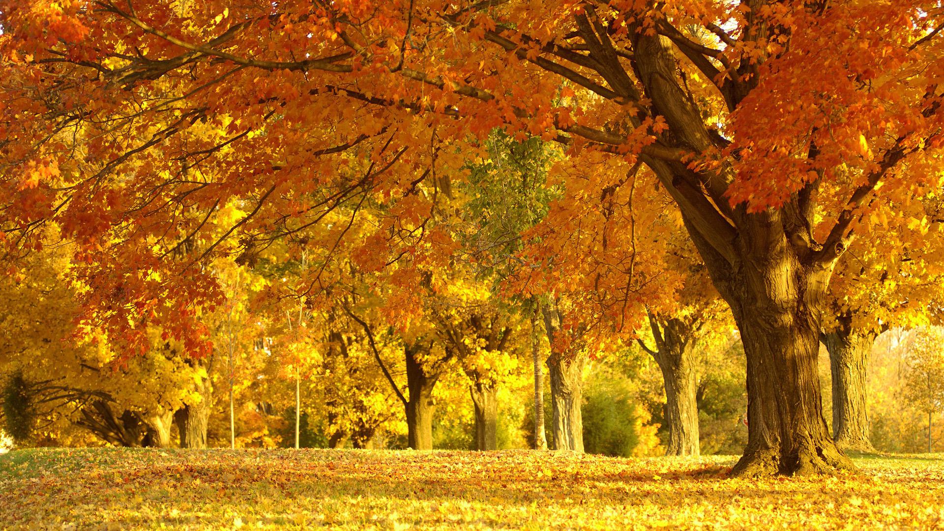 Autumn Forest Wallpaper For Desktop   HD Wallpapers 1920x1080