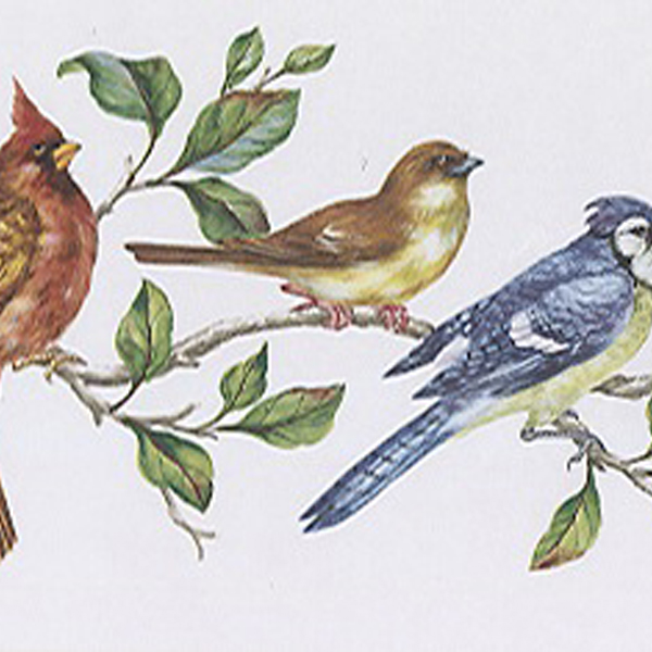 451 1667 Multicolor Bird Perch   Brewster Wallpaper Borders 600x600