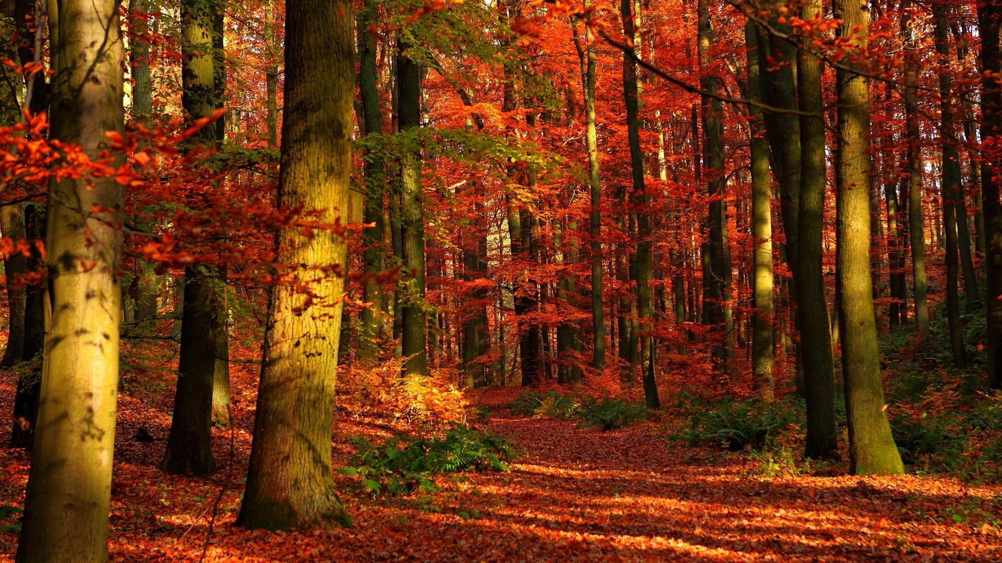 природа деревья листья осень nature trees leaves autumn  № 1036990 загрузить