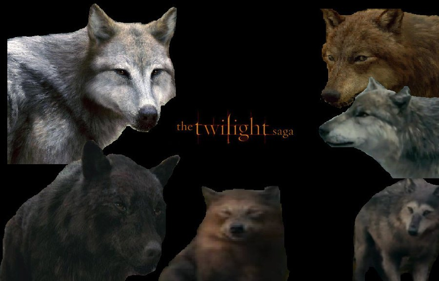 Twilight Saga Wolves by AlphaWolfKodijr 900x575