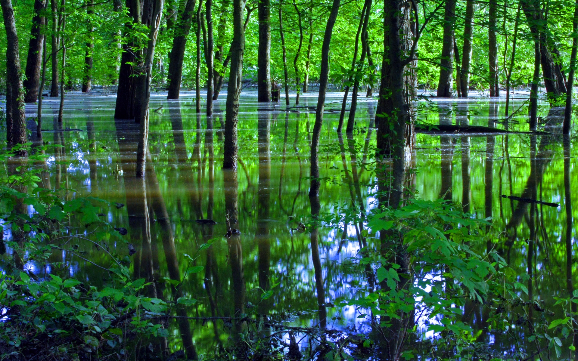 Swamp Computer Wallpaper Desktop Background 1920x1200 1920x1200