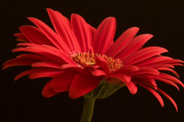 Beautiful Wallpapers gerbera and daisy flower wallpaper 640x425