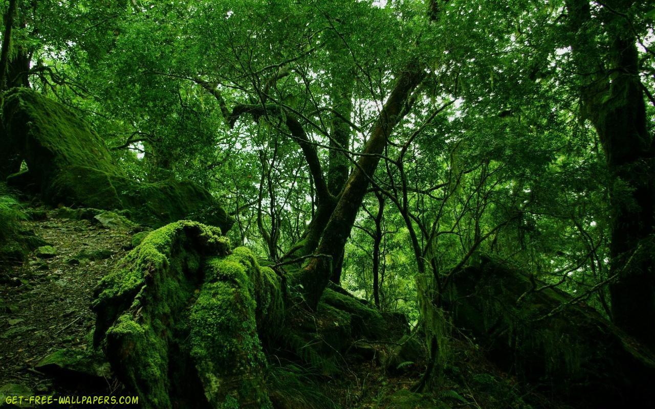 Download Green Forest Wallpaper 1280x800