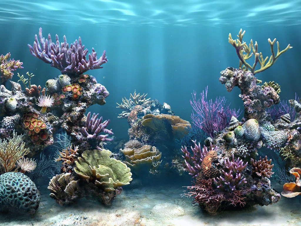 Aquaculture Wallpaper My Style Coral reef aquarium Aquarium 1024x768