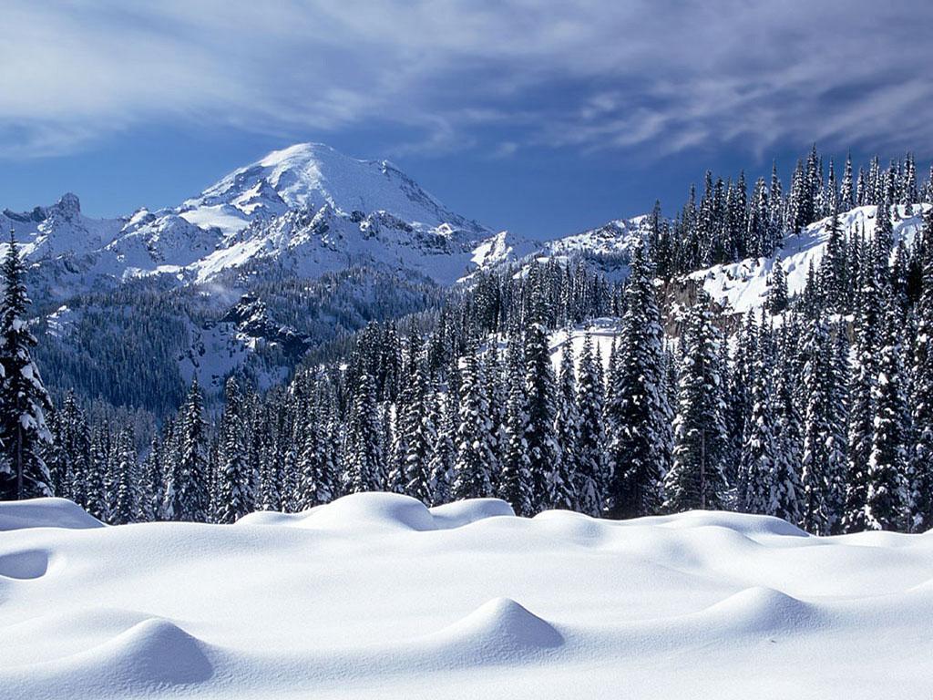 hd snow forest wallpaper hd snow wallpaper hd snow wallpaper 1024x768