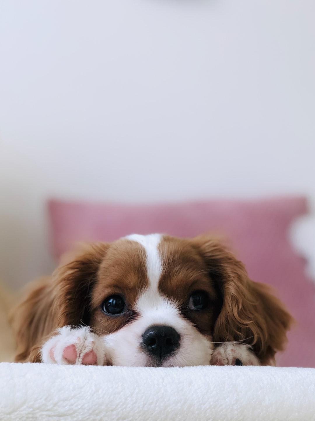 Cute Dog Wallpaper   NawPic 1080x1441
