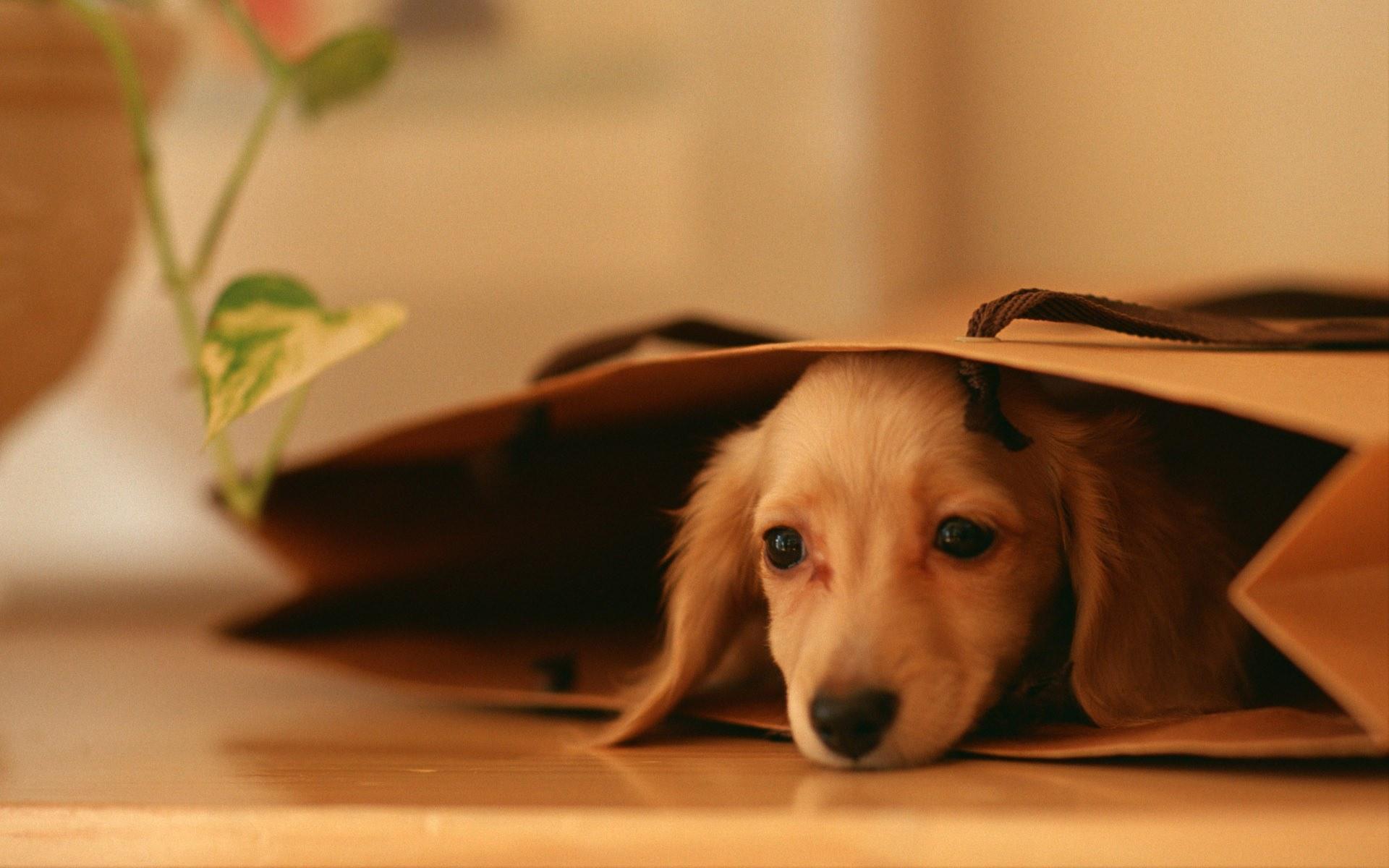 собака пакет сумка  № 1143245 бесплатно