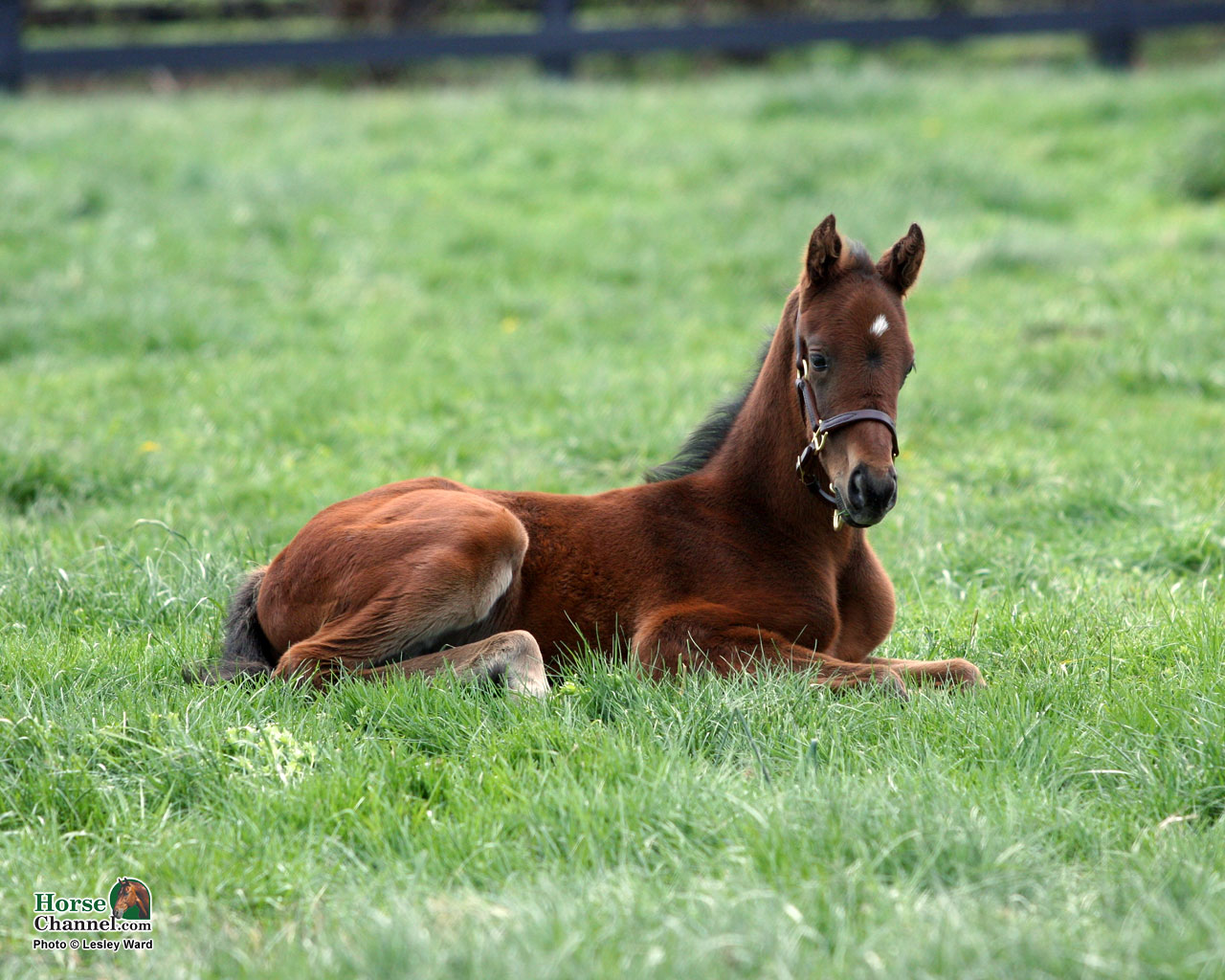 Springtime Foal Screensaver and Desktop Wallpapers 1280x1024