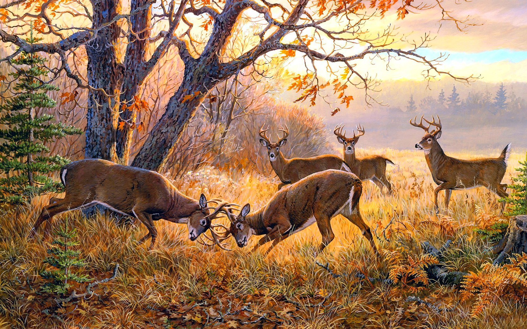 en automne les cerfs Wallpaper   ForWallpapercom 1680x1050