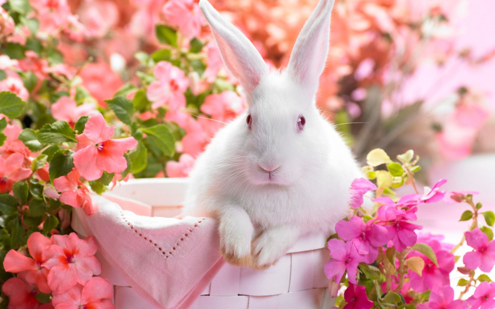 Download Spring Bunny HD Wallpaper 1502 Full Size 1600x1000