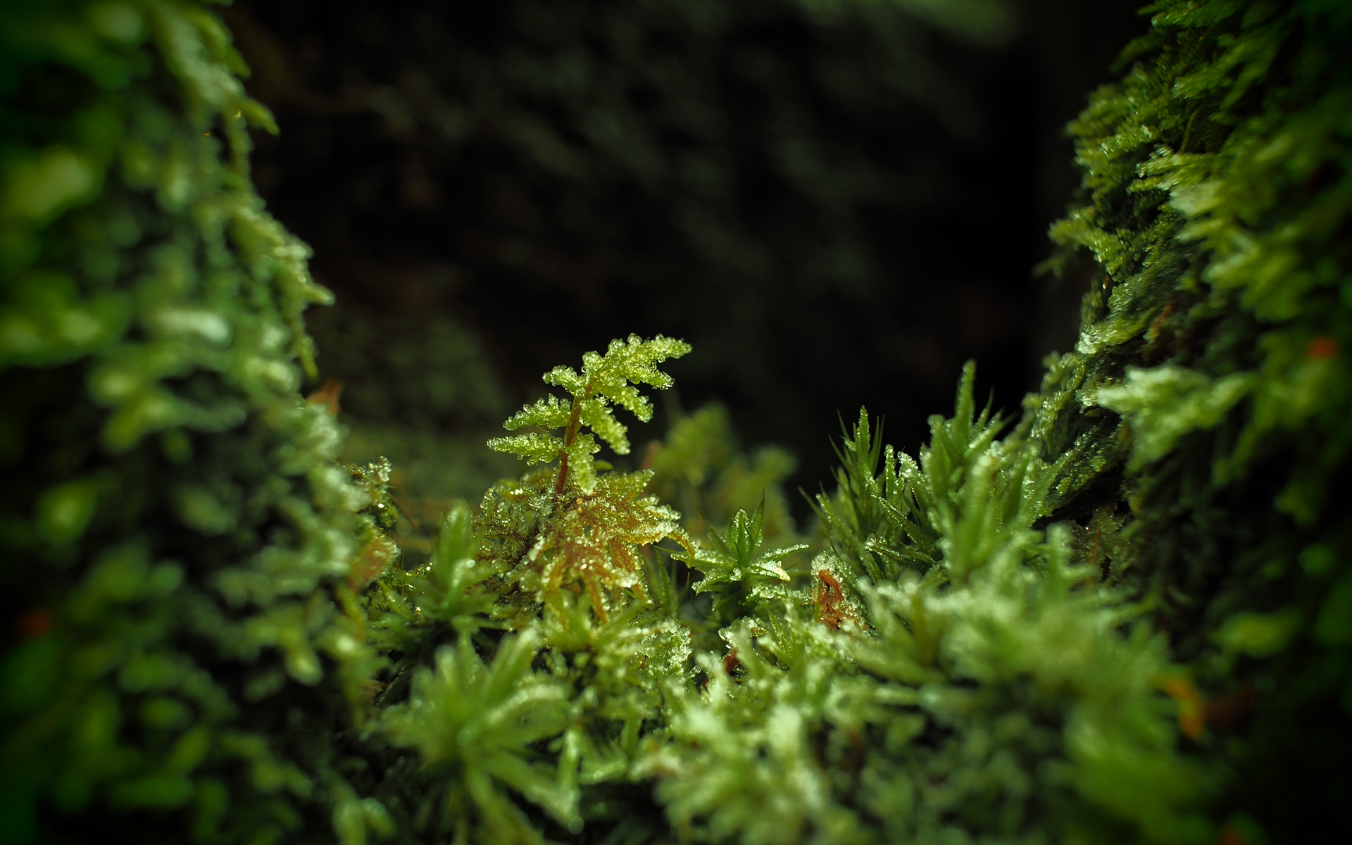 Moss In Forest wallpaper 1920x1200