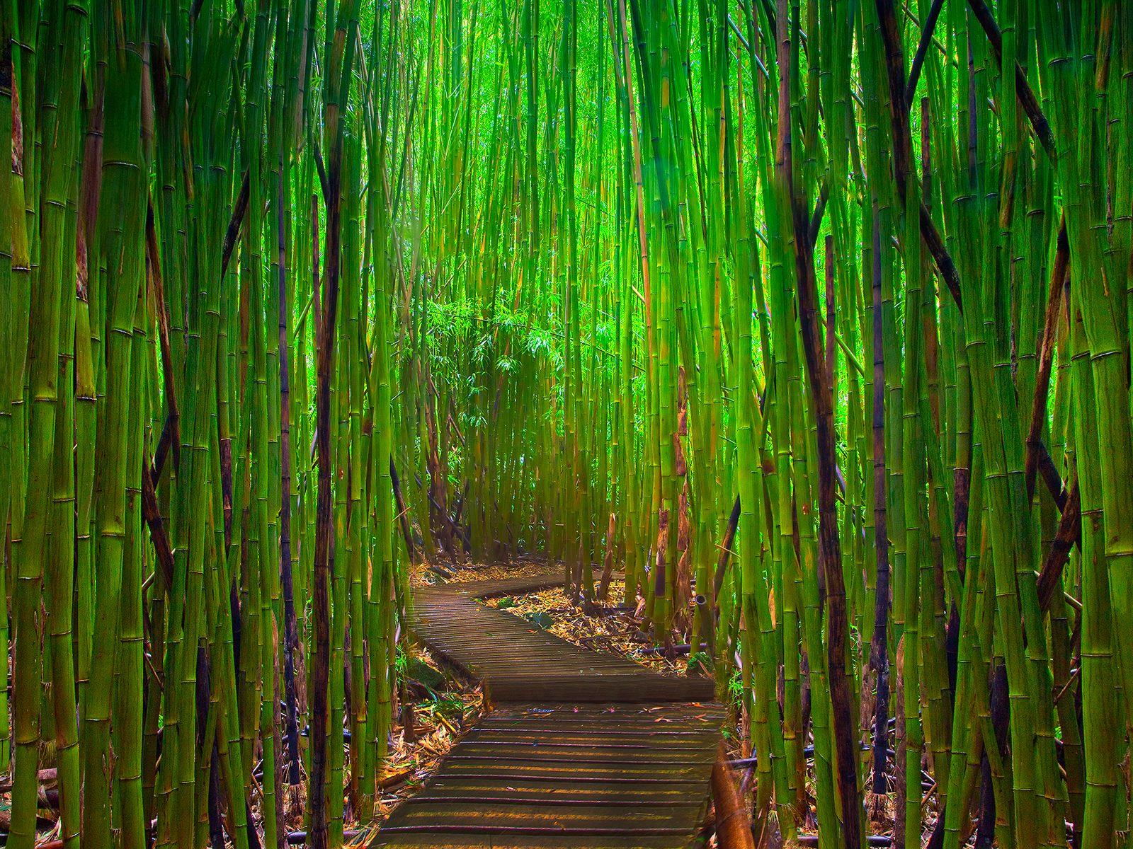 Bamboo Wallpaper Border 1600x1200