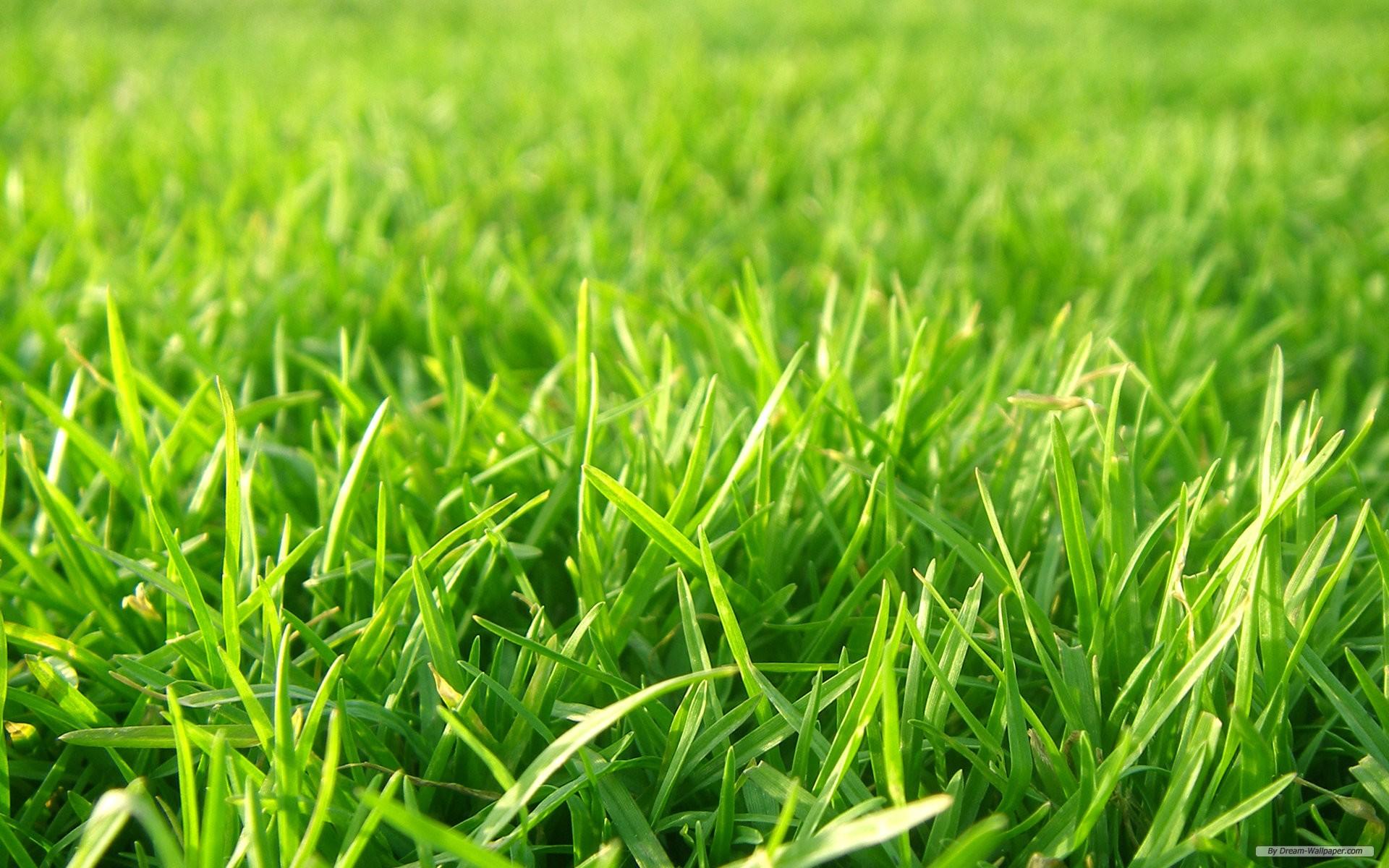 wallpaper   Grass Football Pitches wallpaper   1920x1200 wallpaper 1920x1200