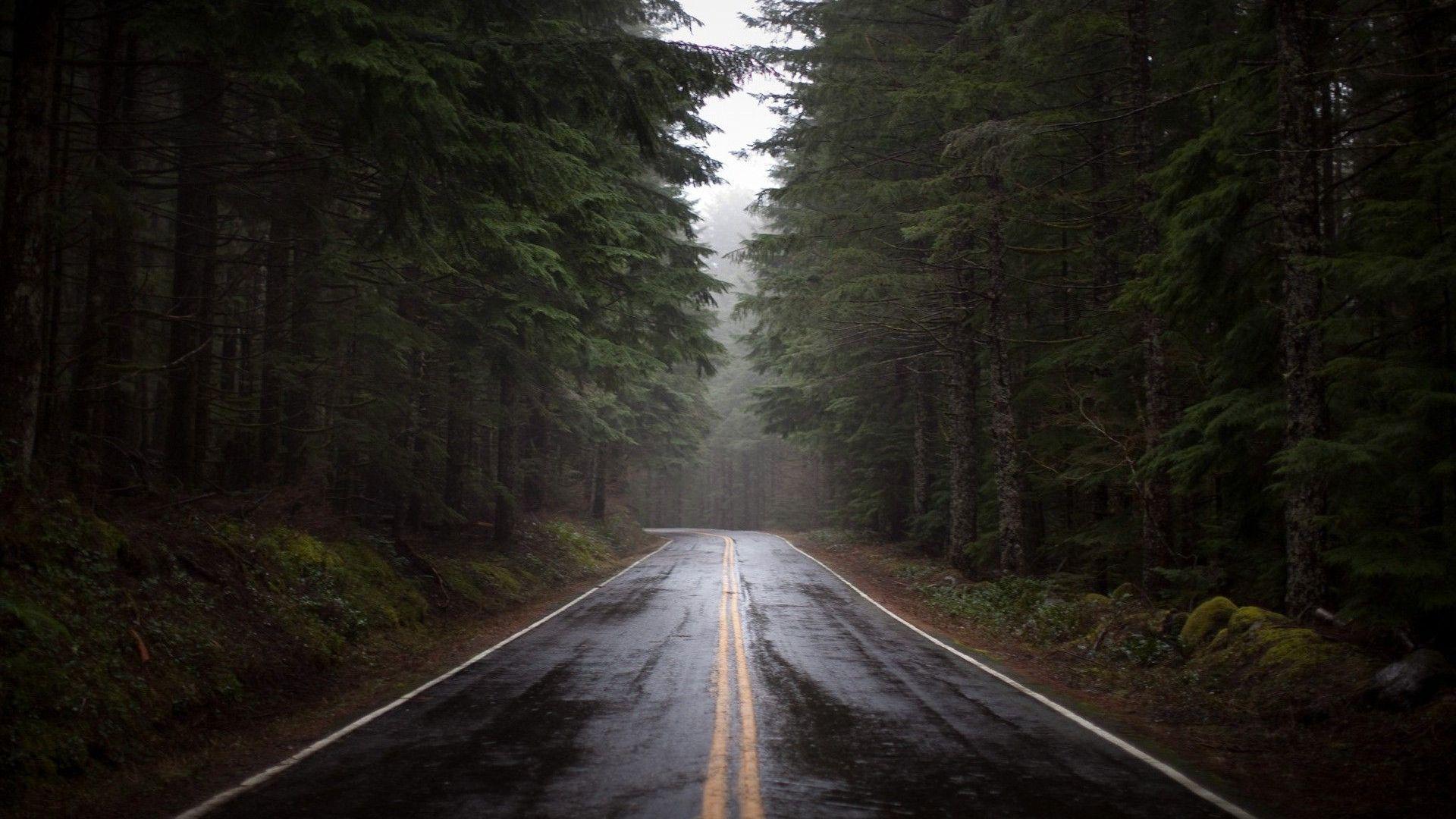 Rainy Forest Wallpaper - WallpaperSafari