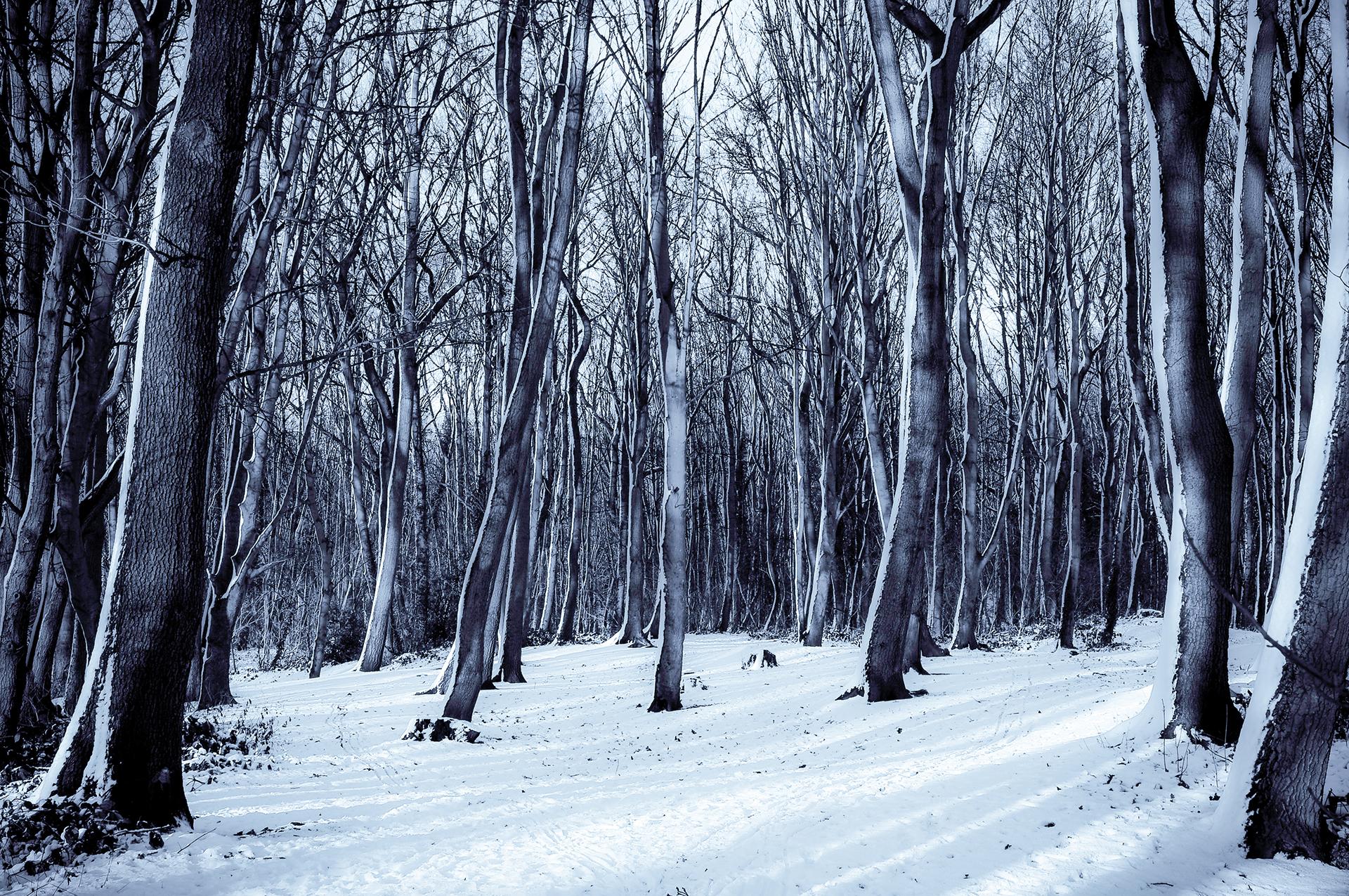 Winter Snow Tree Nature Forest Scenes Desktop Wallpaper 1920x1275