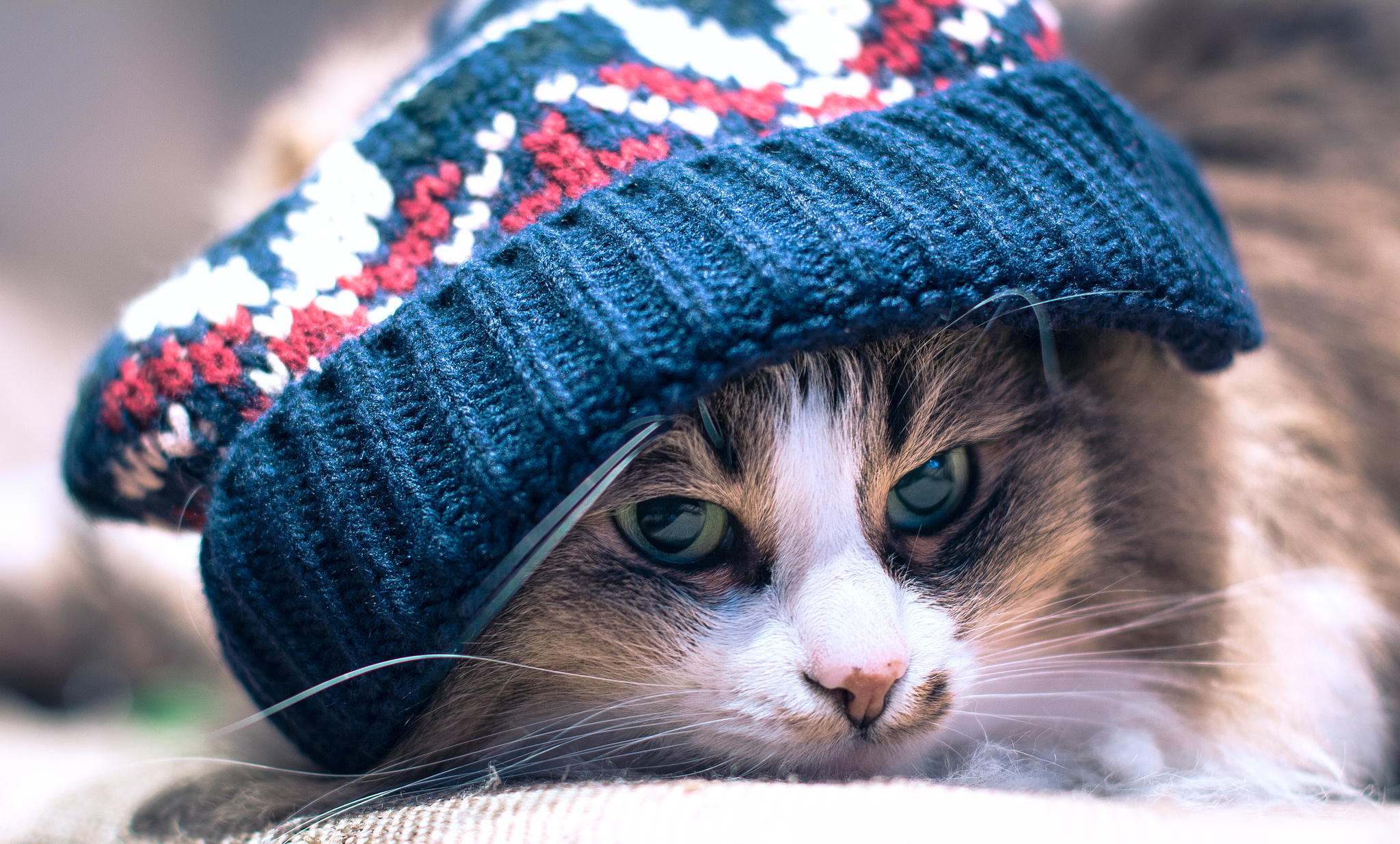 Cool Green Eyed Calico Color Cat Wearing Blue Wool Hat 2048x1235
