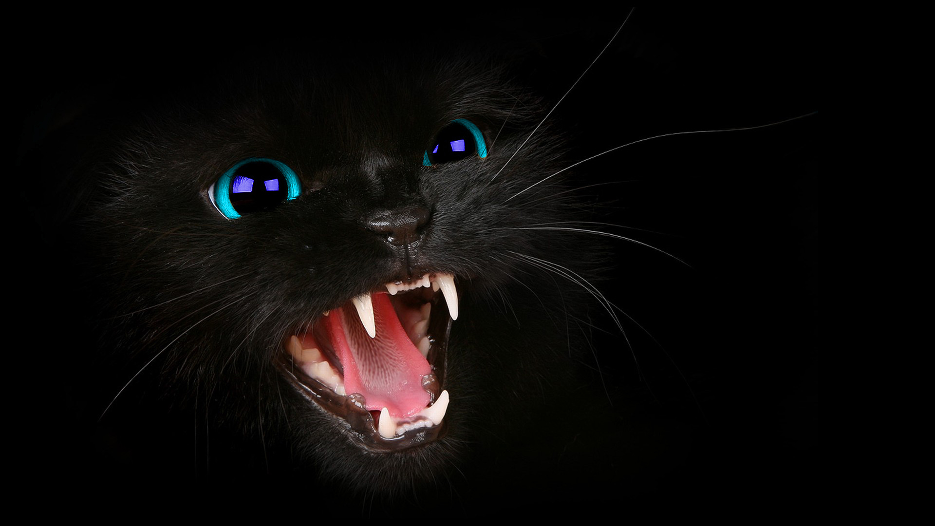 HD Black Cat BLue Eyes WallPaper by HarriePatemanDesigns on 1920x1080