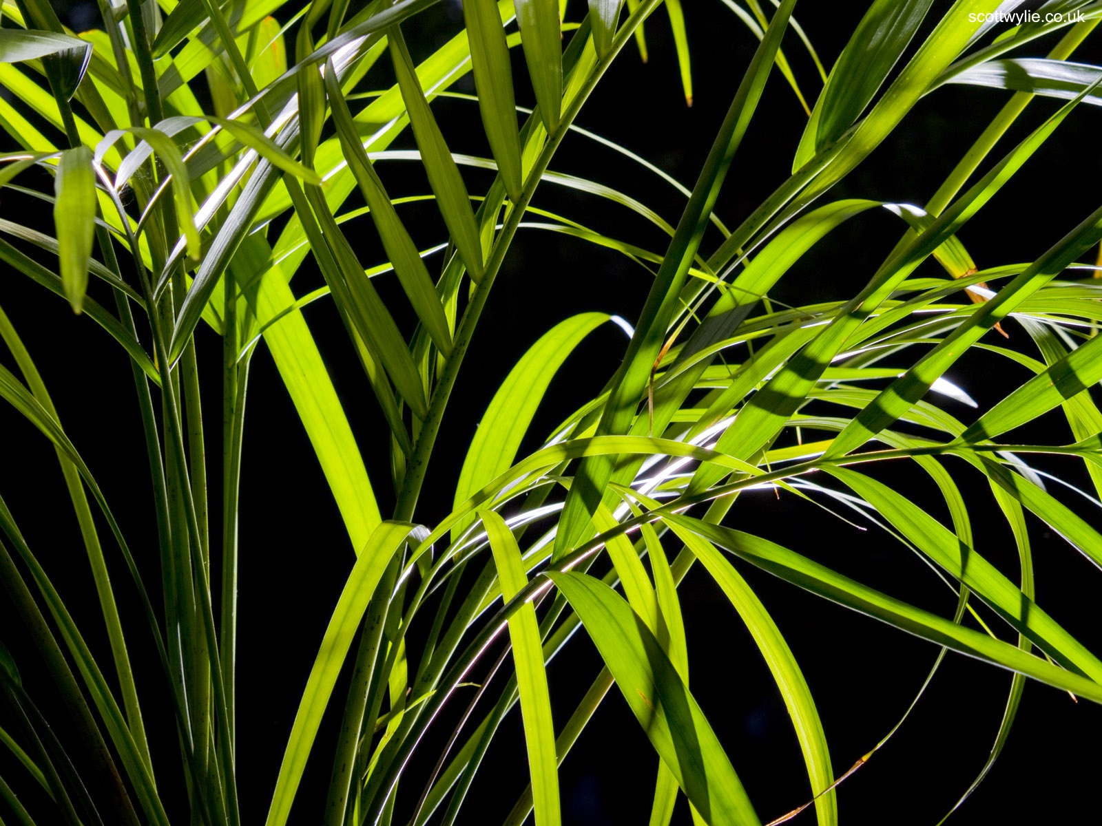 Palm Leaves wallpapers Palm Leaves stock photos 1600x1200