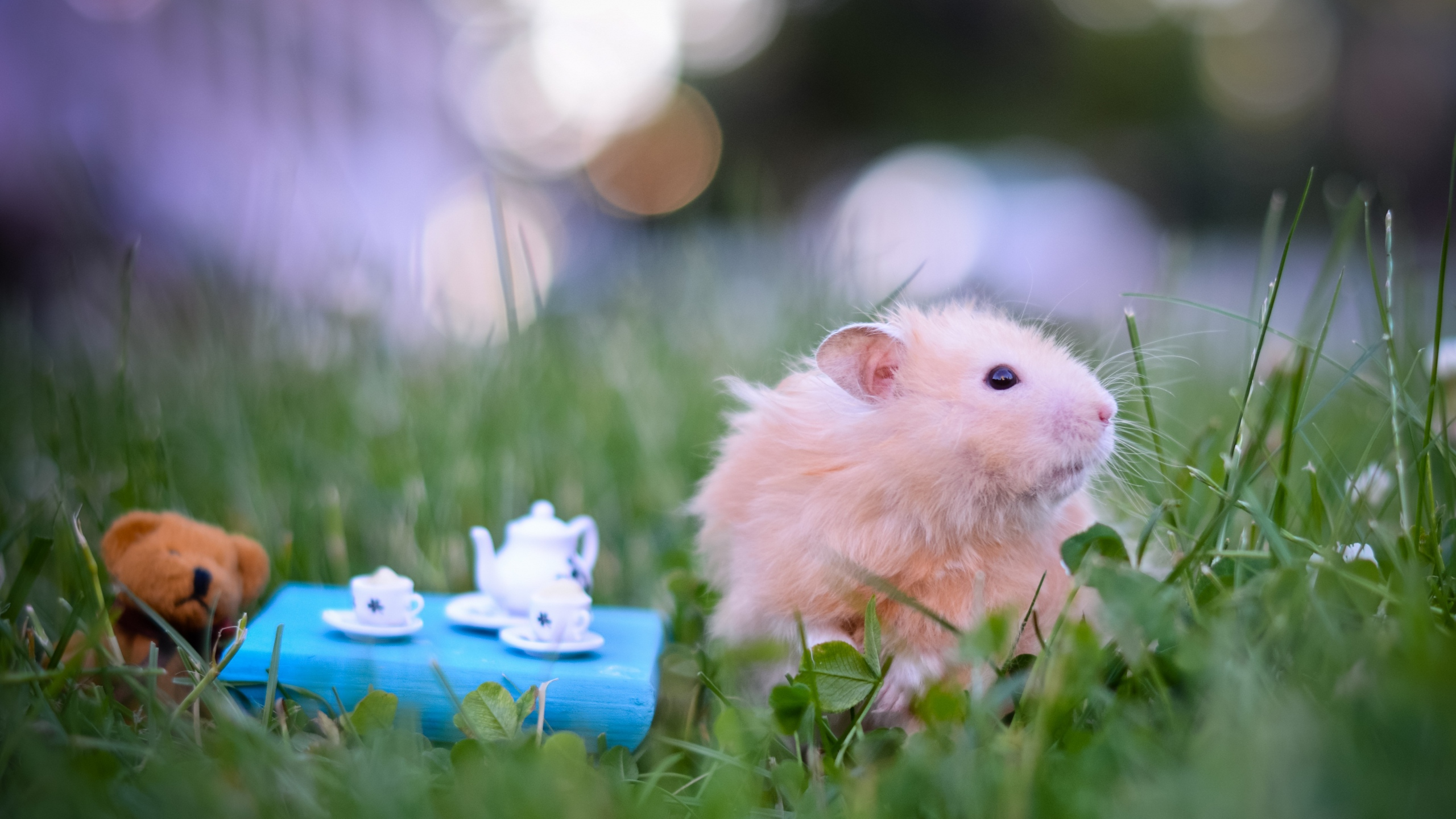 Animal Funny Hamster On Park Wallpaper Full HD 12194 Wallpaper High 2560x1440