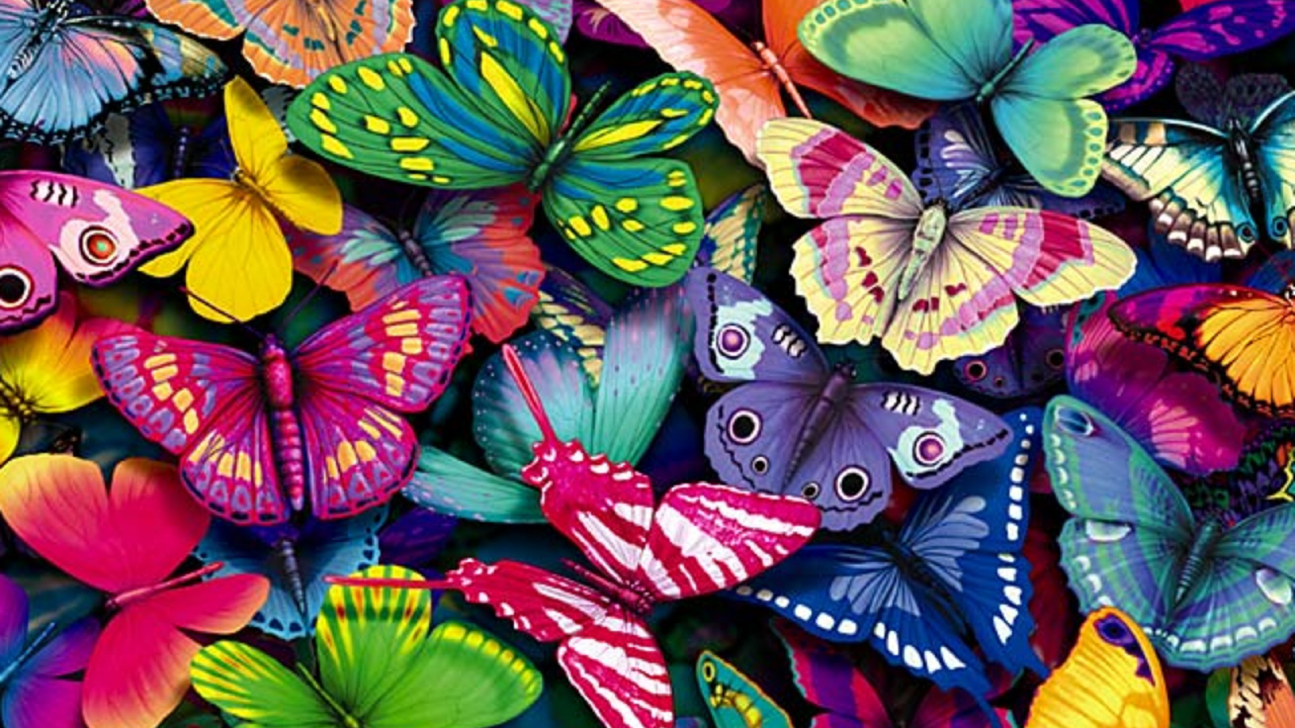 Cool Wallpapers HD with Colorful Butterfly in Cartoon HD Wallpapers 2560x1440