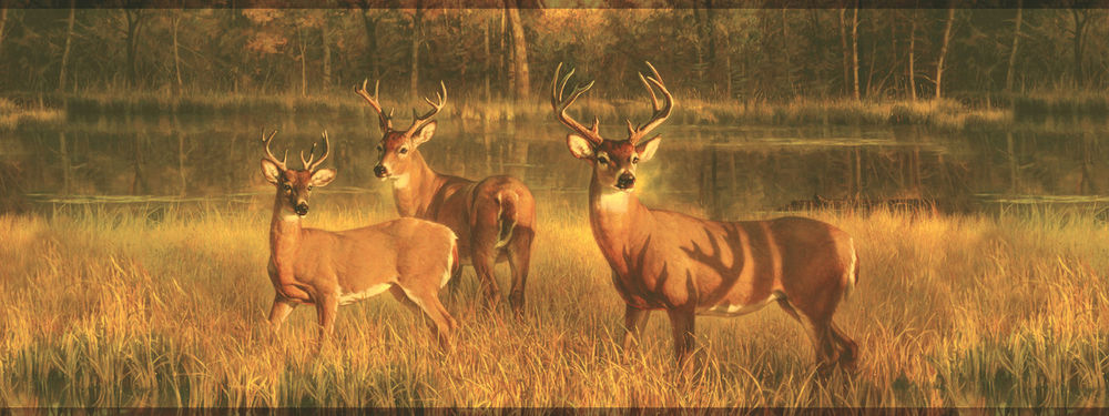 Deer Buck Wallpaper Border Lake Scene Wallpaper Hunting Border 1000x375