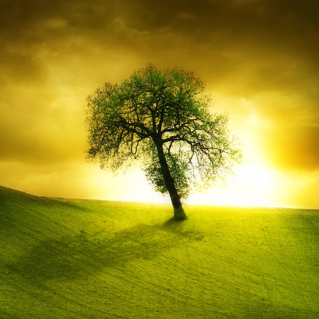 Lonely beautiful tree ipad wallpaper to download 1024x1024