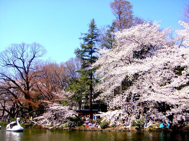 Beautiful Spring Celebration   Traveler Photo Contest 2012   National 608x456