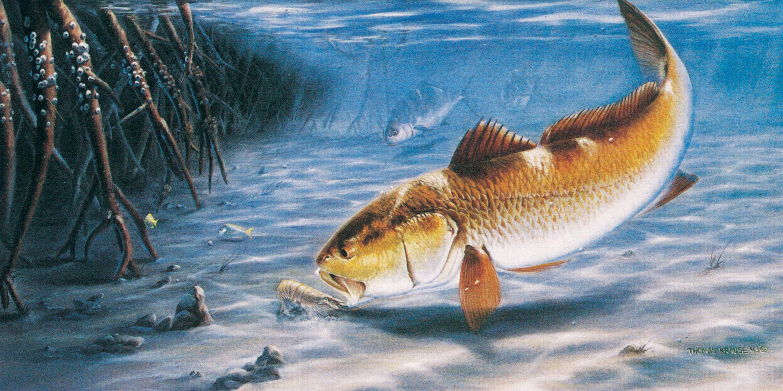 Fishing Wallpaper Background 3001x1500