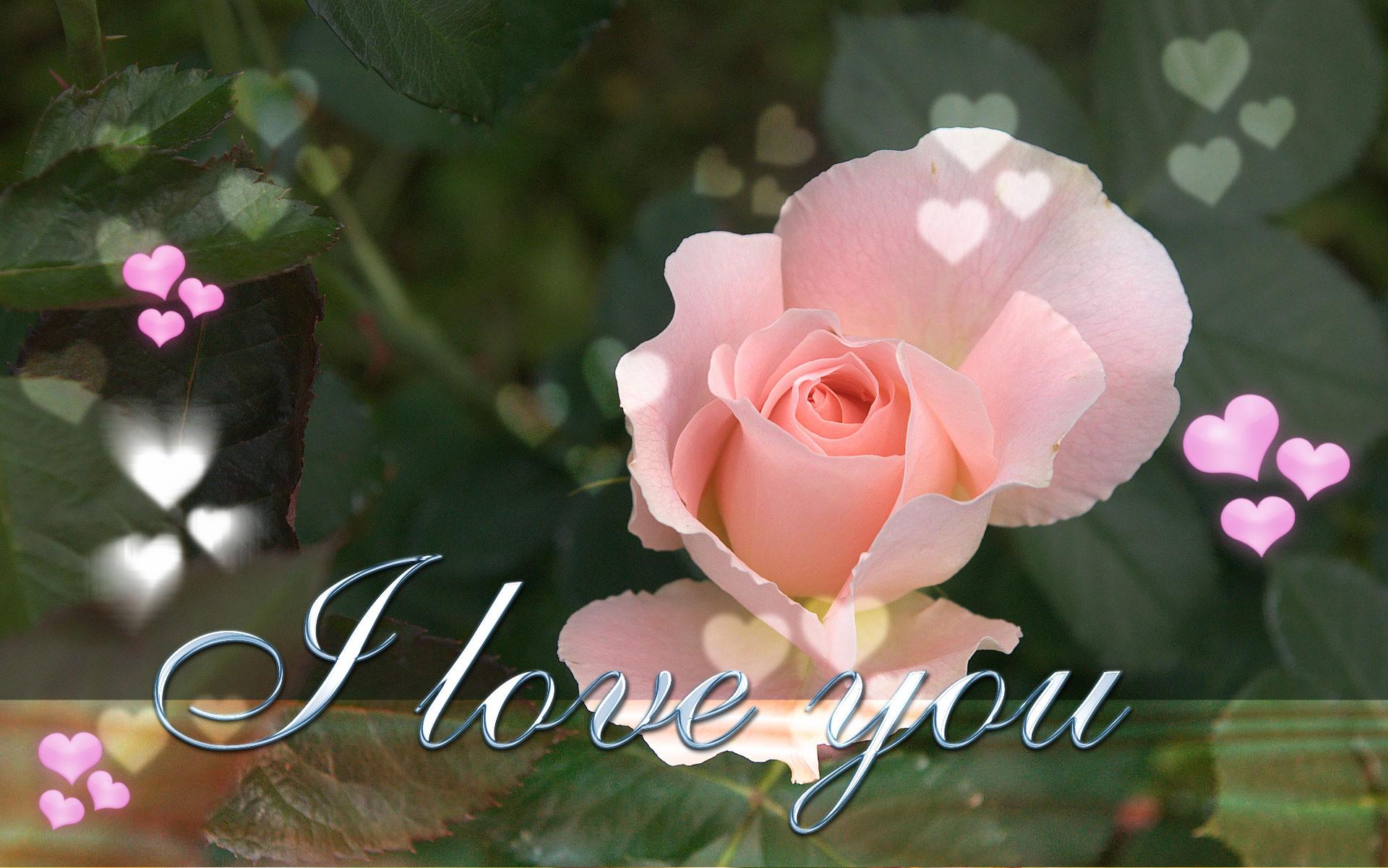 sweet i love you wallpaper 1920x1201