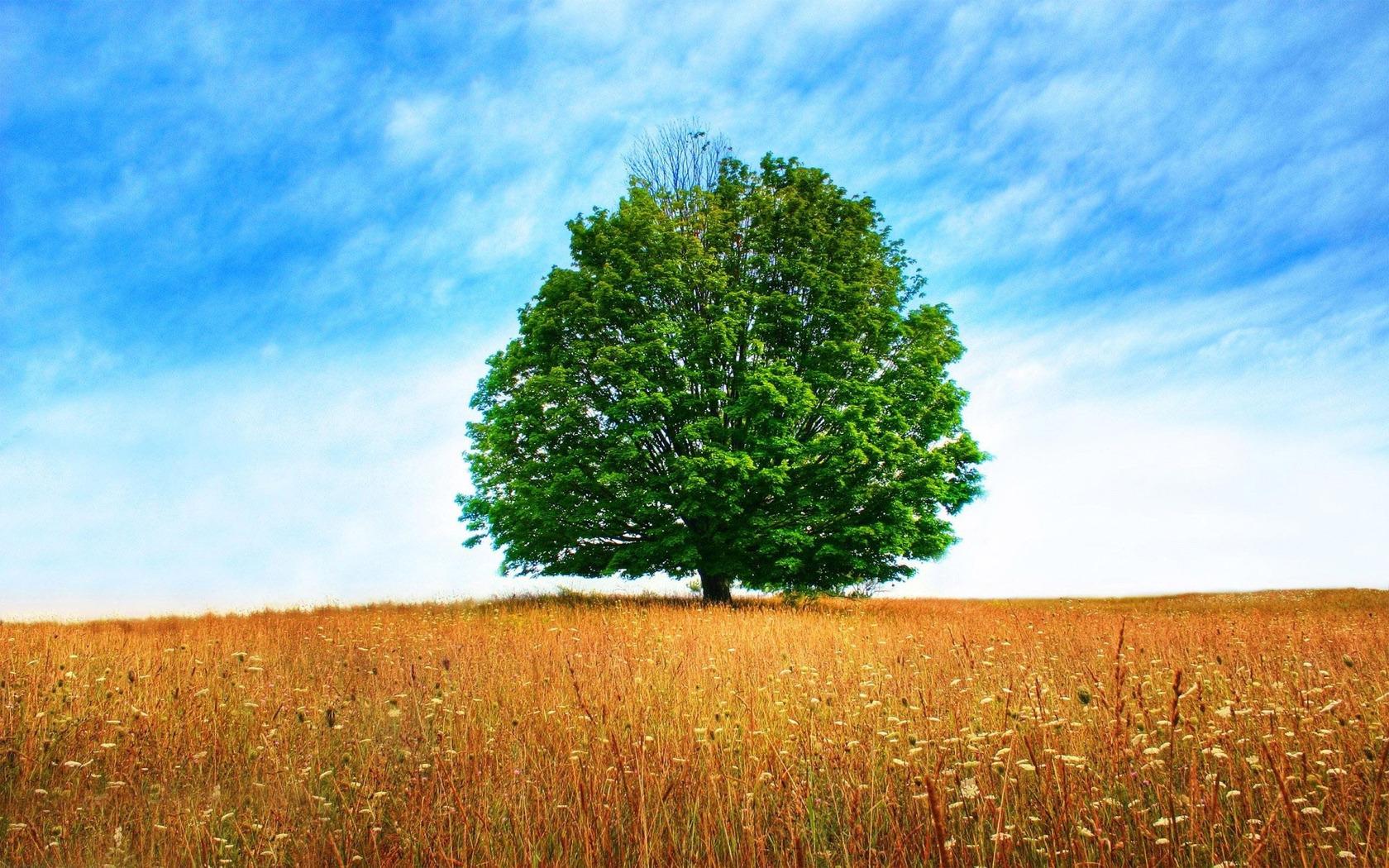 Lone tree wallpaper 11573 1680x1050