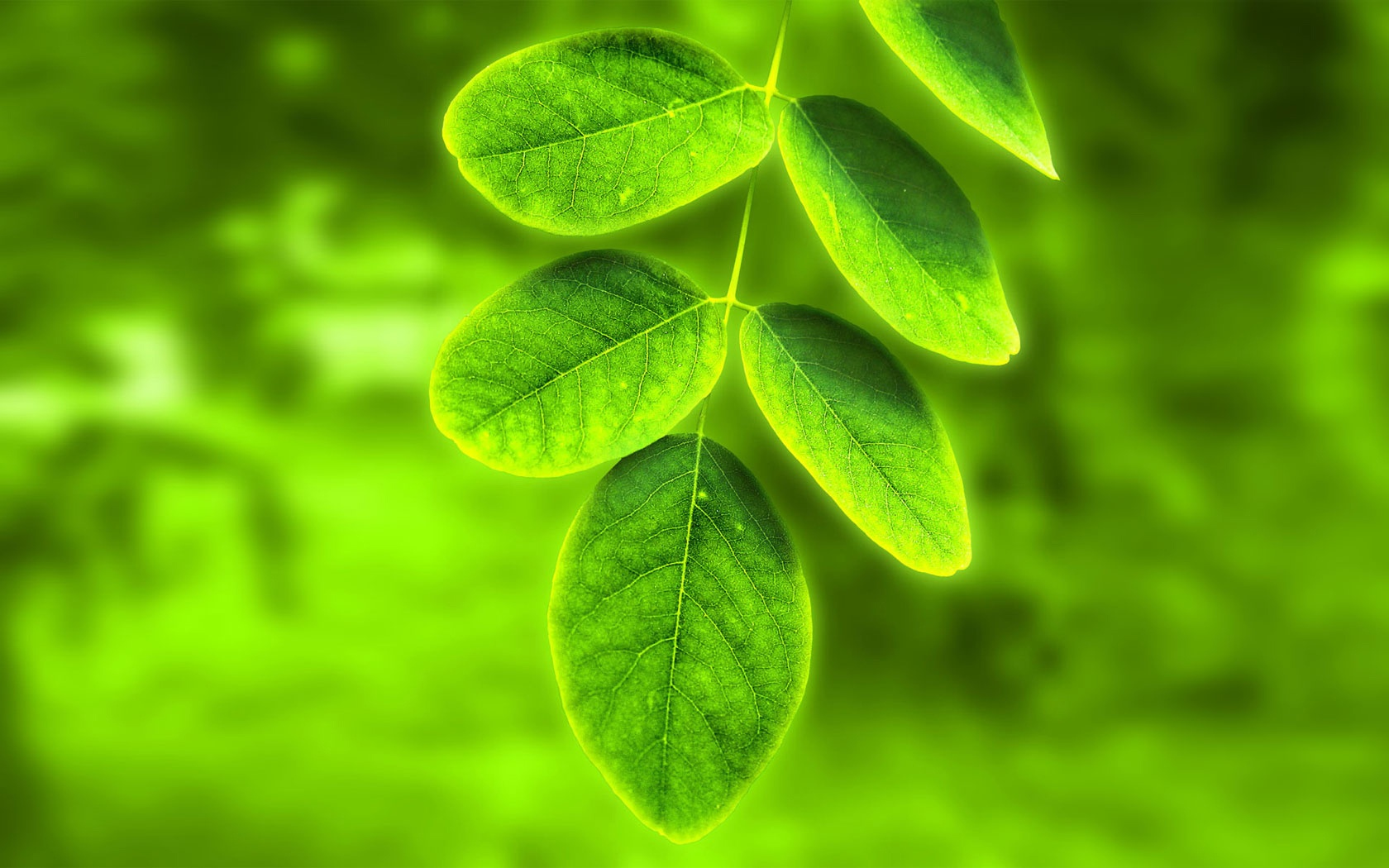 Download the nature wallpaper named Green leaf It has been viewed 1680x1050