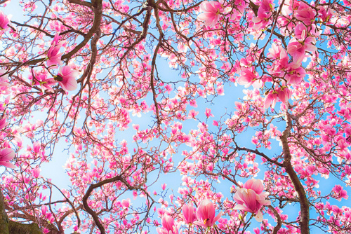 Flower fandom 500x334