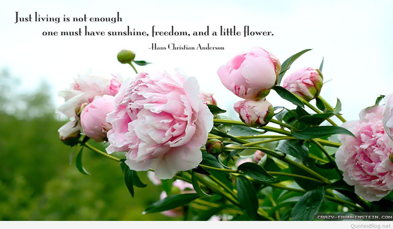 Best Spring Flowers Images Quotes sayings 2017 2018 1366x796