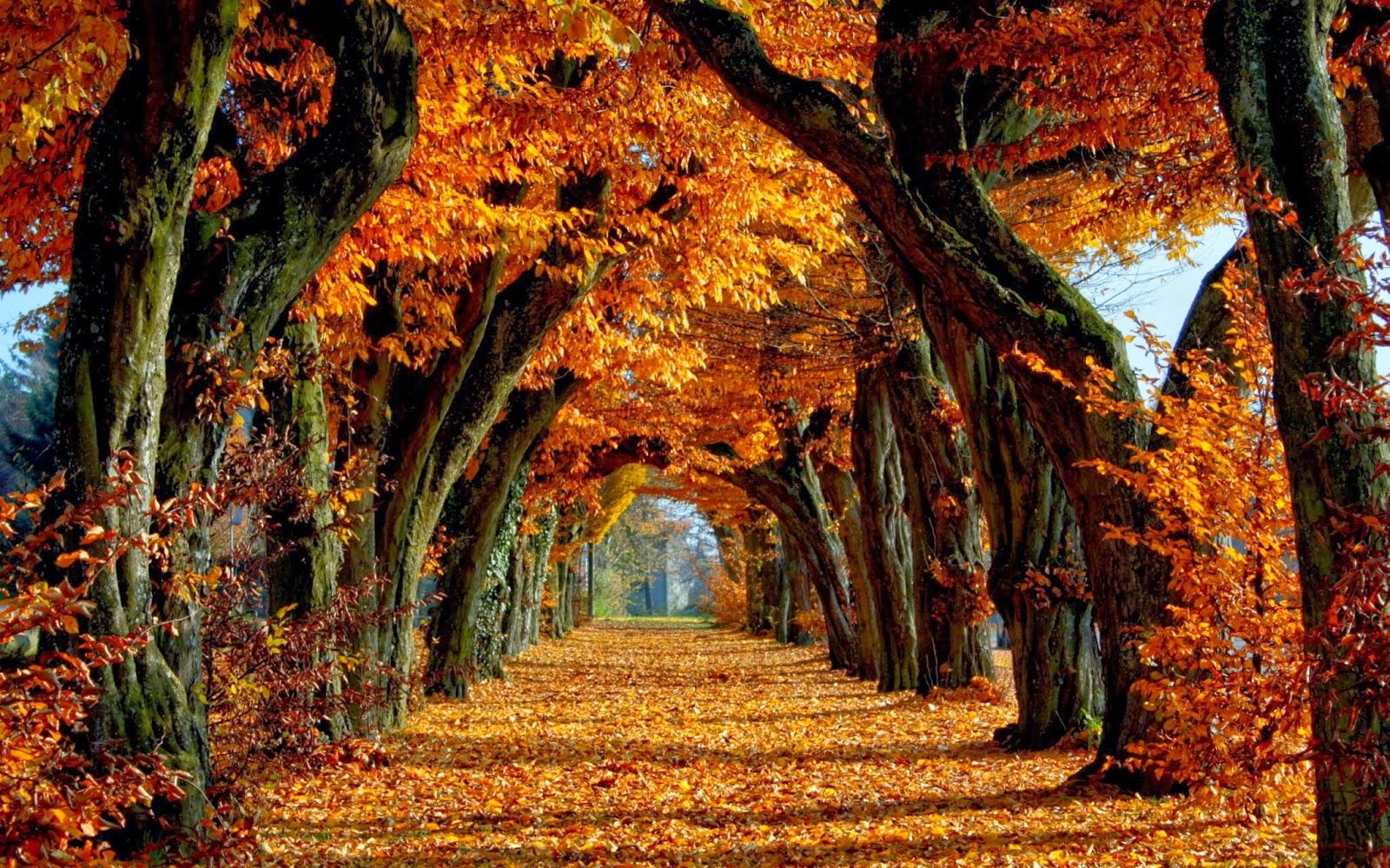 Autumn desktopAutumn desktop Wallpaper 1600x1000