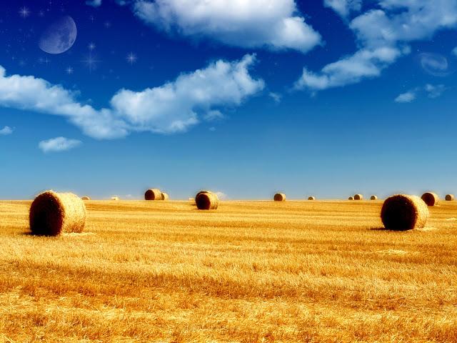 Summer Wallpaper HD For Desktop Wallpaper HD And Background 640x480