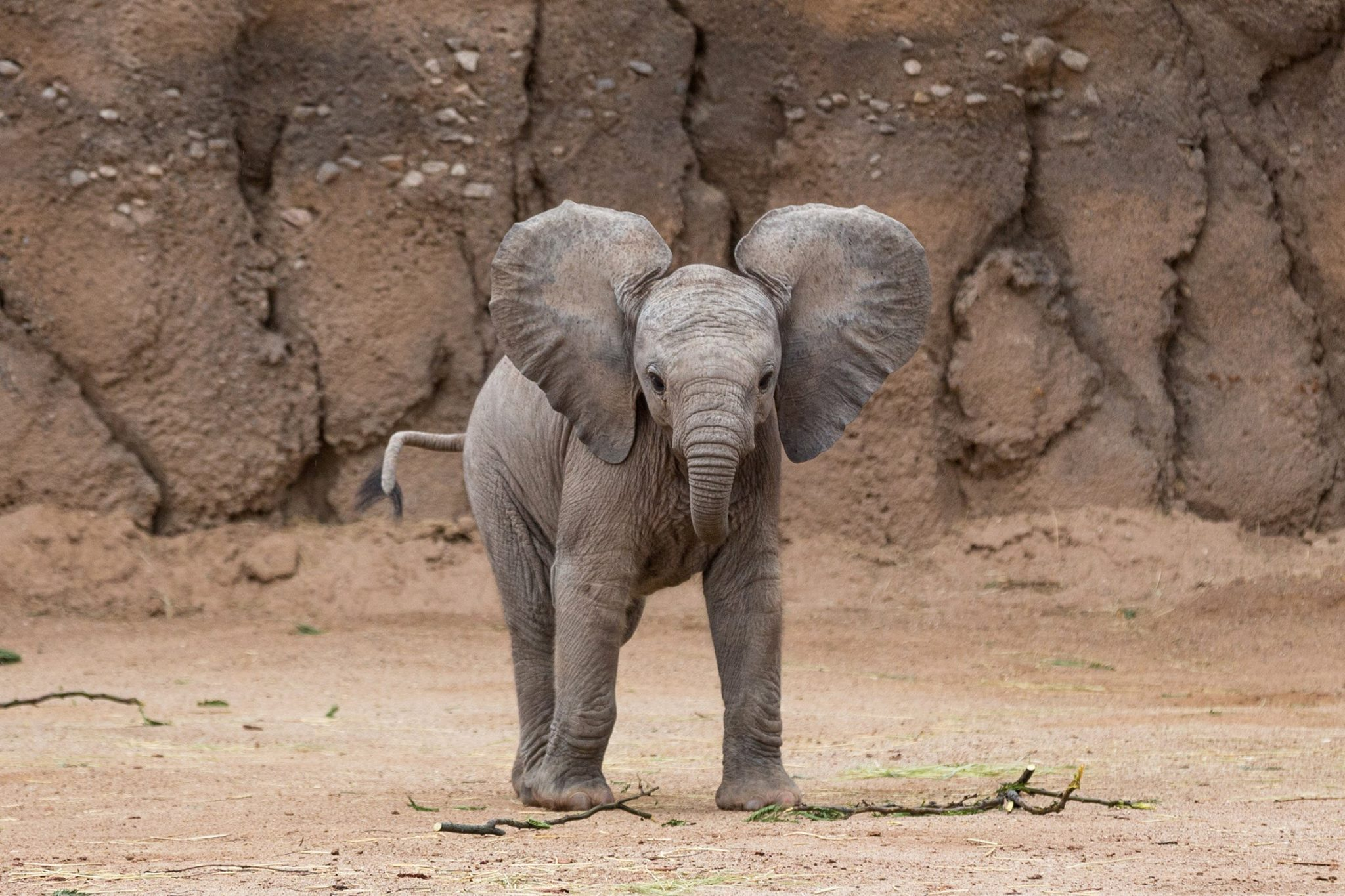 Baby elephant wallpapers Baby Animals 2048x1365