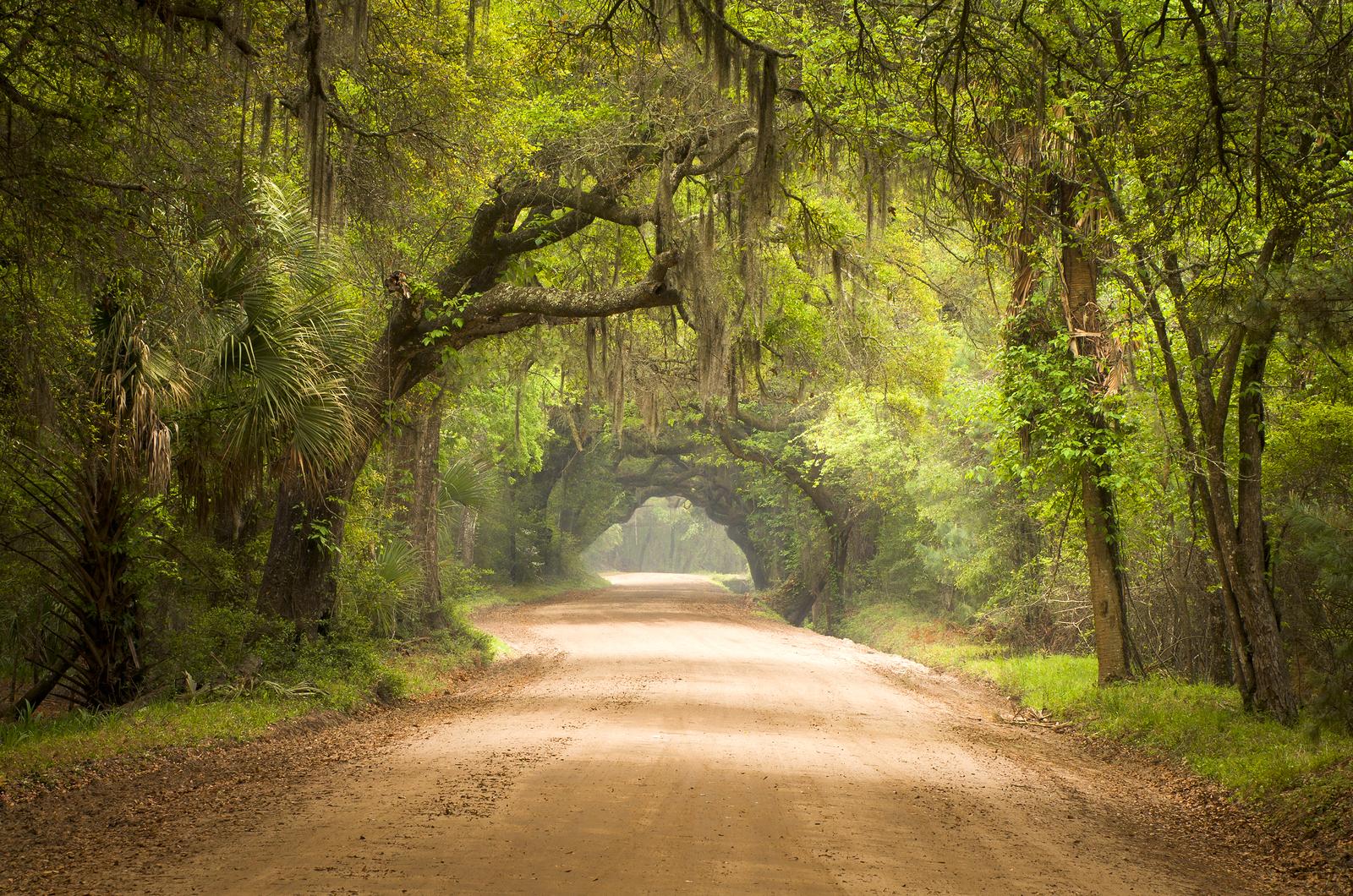 Charleston Sc Dirt Road Forest Botany Bay Plantati by macinivnw on 1600x1060