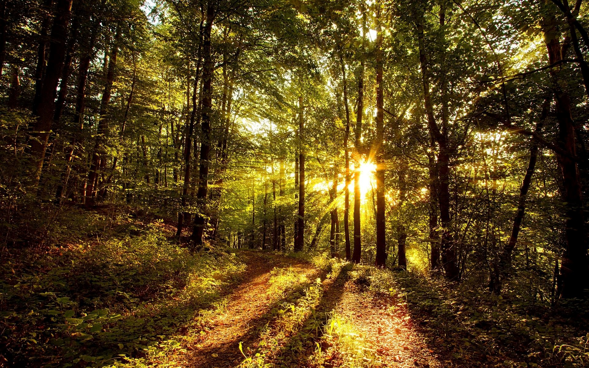 Nature Sunny Forest Wallpaper | HD Wallpapers