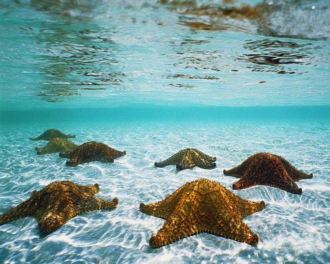 Amazing Animated Desktop Wallpaper Beach Detail Photo 1124x899